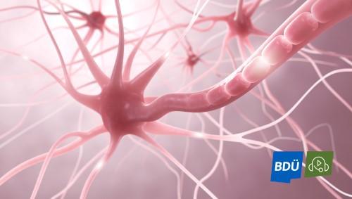 Webinarreihe Medizin: Neurophysiologie für medizinische Übersetzer markiert den Auftakt in die Weiterbildungssaison 2021